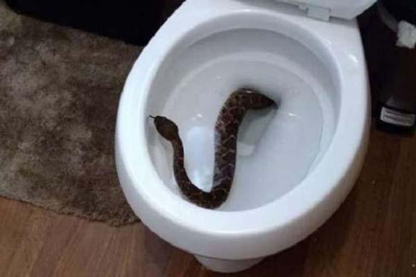 snake03_oosa